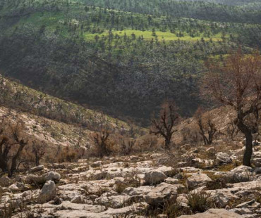 Yarmouk Forest Reserve Trip