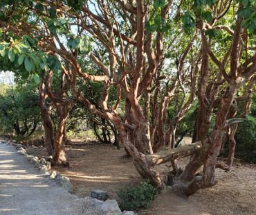 Roe Deer Trail-Ajloun Reserve