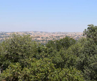 The Prophet's Trail