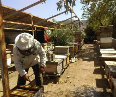 Ibrahim Al Qurashi Honey & Apiaries