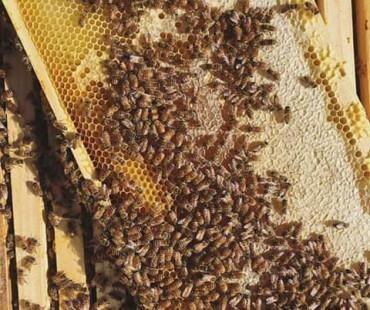 Smadi apiaries