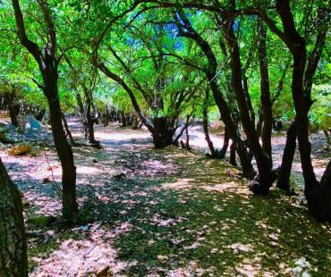 Arhaba trail